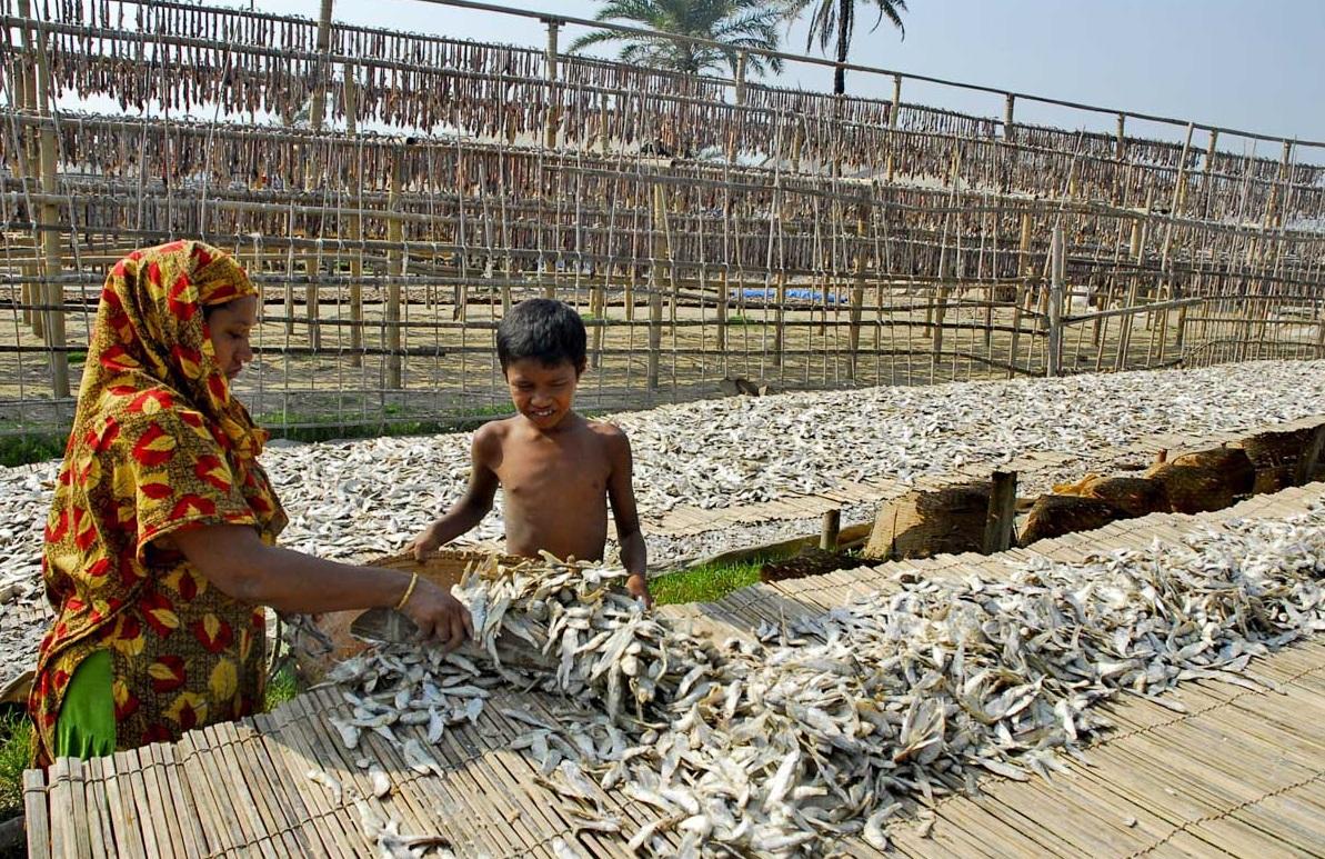 শীতের মৌসুমে চট্টগ্রামে কর্ণফুলির তীরে লক্ষ্যারচরে শুঁটকি শুকানোর কাজ চলছে