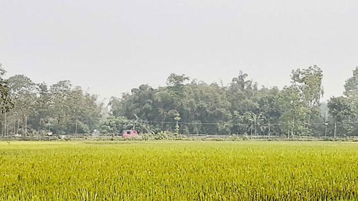 ফুলবাড়ী সীমান্তে কাঁটাতারের বেড়া নির্মাণ বিএসএফের