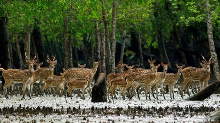 সুন্দরবনে ট্রলারসহ ৬০ হরিণ শিকারি আটক