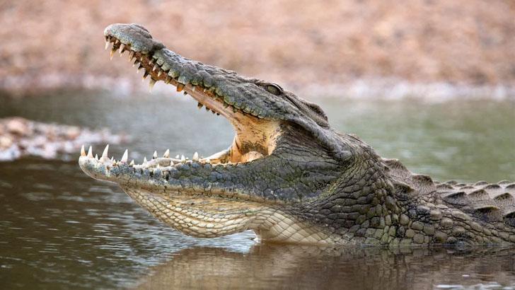 লকডাউন ভেঙে মাছ ধরতে গিয়ে কুমিরের গ্রাসে