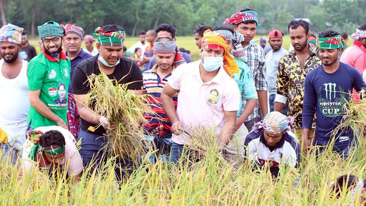 কুমিল্লায় কৃষকের ধান কেটে দিল জেলা ছাত্রলীগ