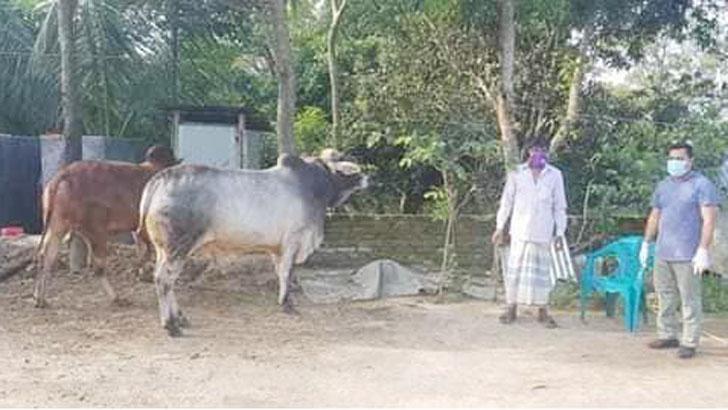 কুমিল্লায় ডেইরি ফার্ম থেকে ৭ চোরাই গরু উদ্ধার