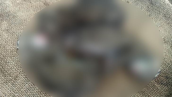 এবার পাবনায় ঘাসের জমিতে মিলল মেছো বাঘের ছানা