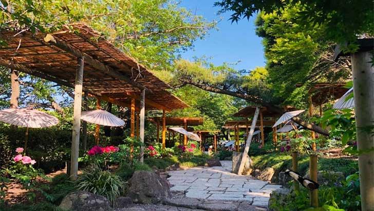 জাপানের একটি মনোরম এলাকা। ছবি: সংগৃহীত