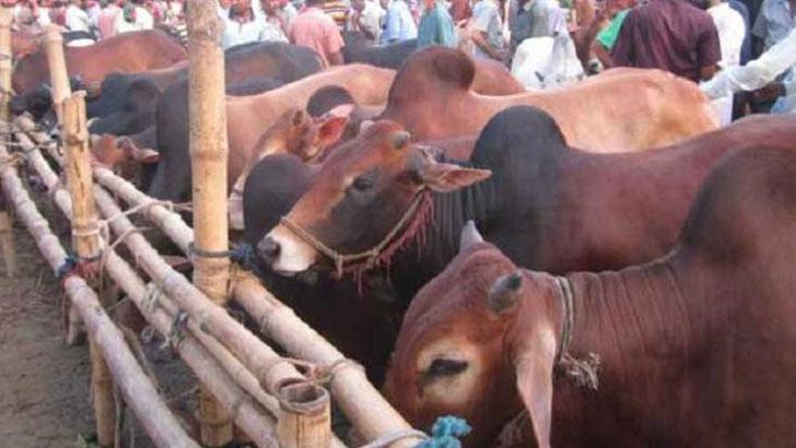 রংপুর নগরীতে ৭ শর্তে বসবে পশুর হাট