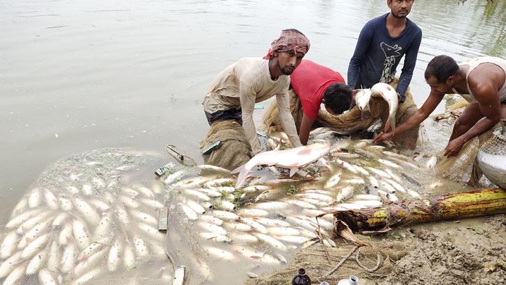 কীটনাশক প্রয়োগে ৫ বিঘা পুকুরের মাছ মেরে ফেলার অভিযোগ