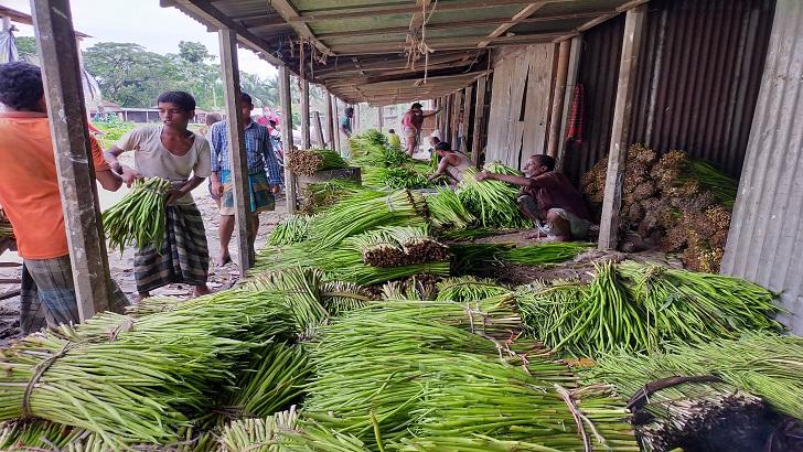 কচুরলতি বিক্রি করে স্বাবলম্বী মকবুল