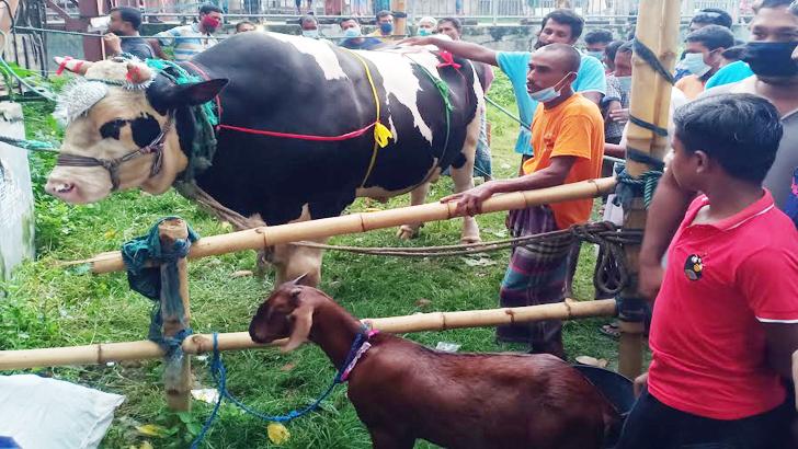 ছাগল ফ্রি থাকলেও বিক্রি হয়নি 'বাংলার টাইগার'