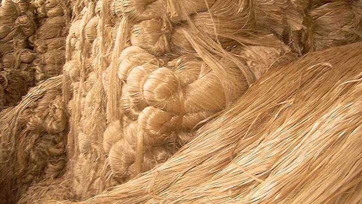 পাট বাংলাদেশের সোনালি আঁশ। বর্তমানে দেশে পাটচাষীর সংখ্যা প্রায় ৩৫ লাখ। জিডিপিতে পাটের অবদান শূন্য দশমিক ২৫ শতাংশ এবং কৃষি জিডিপিতে ১ দশমিক ৩ শতাংশ।