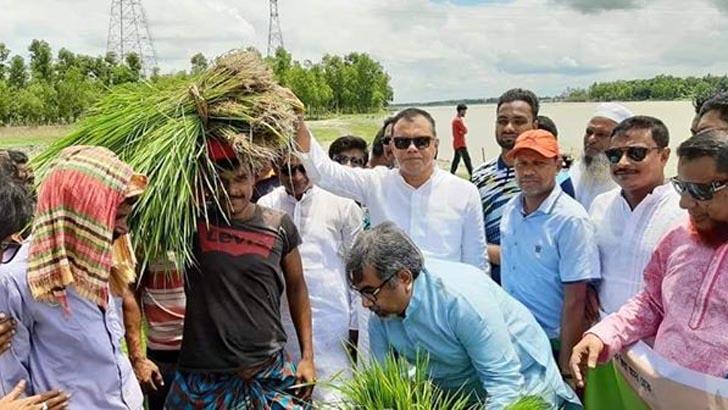 বন্যায় ক্ষতিগ্রস্ত কৃষকদের ধানের চারা দিল বিএনপি