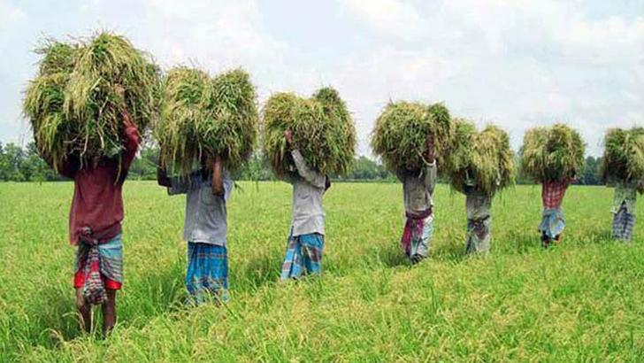 ঘুরে দাঁড়াতে পারছেন না রংপুর অঞ্চলের কৃষকরা