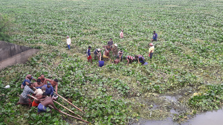 কচুরিপানার জটে দিশাহারা চলনবিলের কৃষক