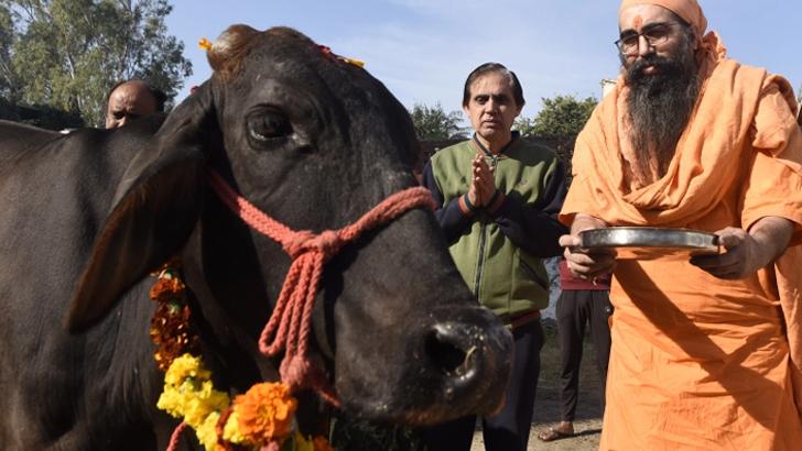 ভারতে 'গো-বিজ্ঞান' পরীক্ষায় পাঁচ লাখ শিক্ষার্থী