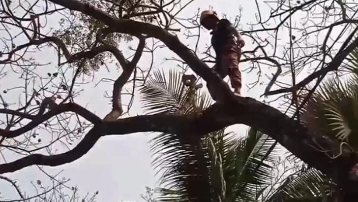 তিন দিন গাছে আটকা পড়া বিড়াল উদ্ধারে ফায়ার সার্ভিস