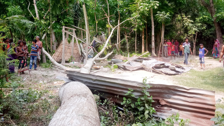 গাছ পড়ে পাঠশালা বিধ্বস্ত, শিক্ষকসহ ২০ শিক্ষার্থী আহত