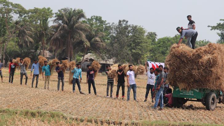 রোজা রেখে কৃষকের জমির ধান কাটলেন ছাত্রলীগ নেতারা