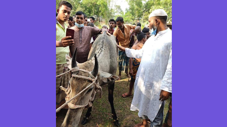 বঙ্গবন্ধু সাফারি পার্ক থেকে হারানো নীলগাইটি মধুপুরে