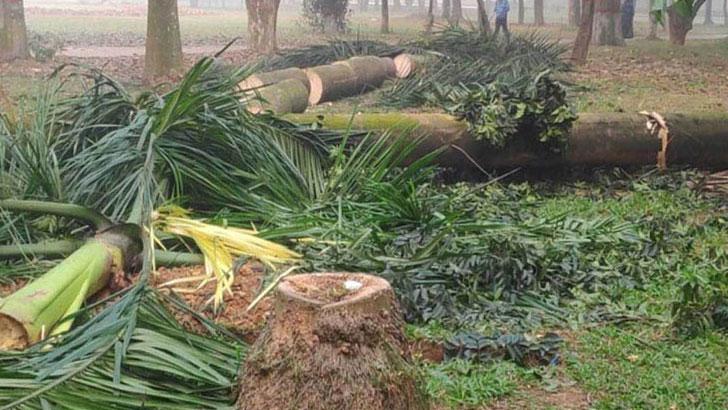 সোহরাওয়ার্দী উদ্যানে আপাতত গাছ কাটা বন্ধ থাকবে