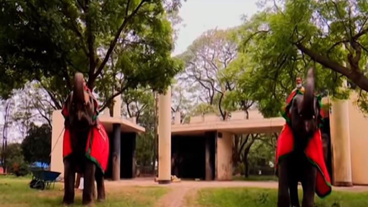 বাহাদুর-সুন্দরীর রোমাঞ্চকর ফুটবল যুদ্ধ; জিতলো কে? (ভিডিও)