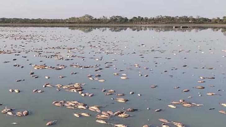 প্রচণ্ড দাবদাহে মরে গেল ৩৫ লাখ টাকার মাছ
