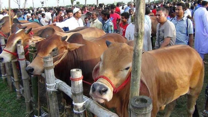 'এক ক্লিকে' হাট থেকে বাসায় যাবে কোরবানির পশু