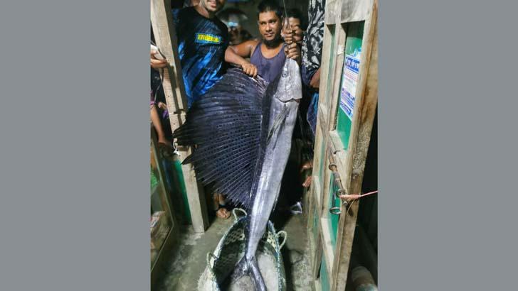 মেঘনায় জেলেদের জালে ২২ কেজির 'পাখি মাছ'