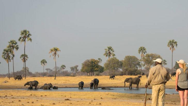 জিম্বাবুয়ে আফ্রিকার অন্যতম একটি অবহেলিত দেশ,
