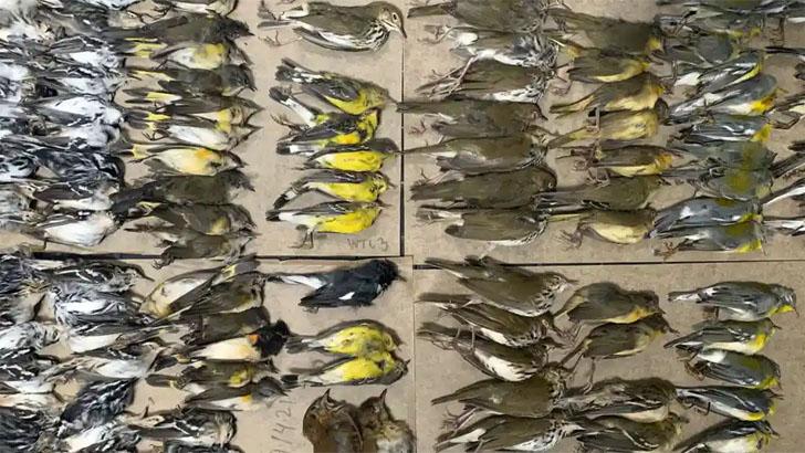 ওয়ার্ল্ড ট্রেড সেন্টারে ধাক্কা খেয়ে ৩০০ পাখির মৃত্যু