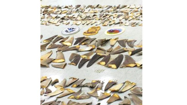 কলম্বিয়ায় হাঙরের ৩৫০০ পাখনা জব্দ